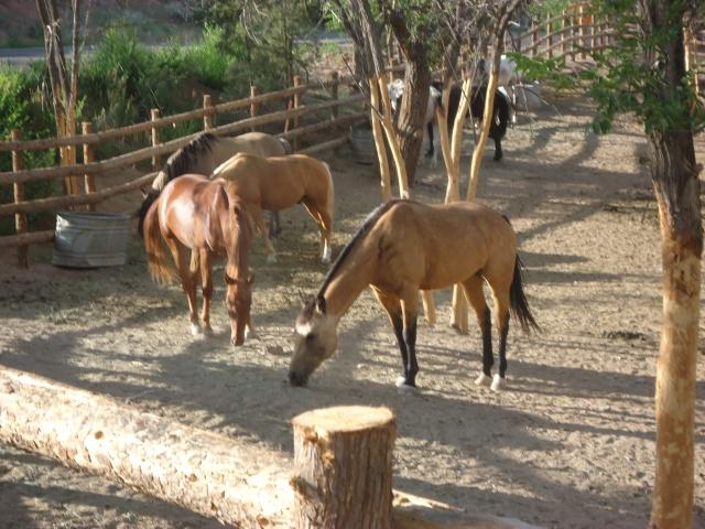 HorseBlog2